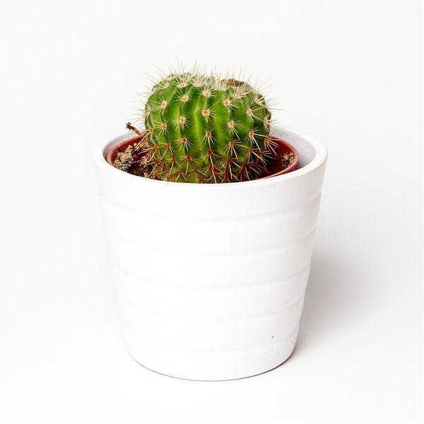 plant-pot.jpg