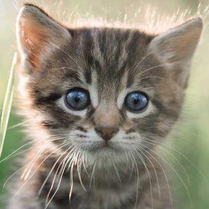 free-cat-behaviour-guide